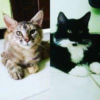HERY CAT LOVER SURABAYA