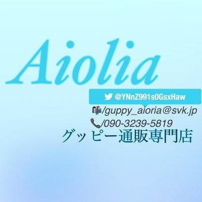 グッピー通販専門店 【Aiolia】's Twitter Profile Picture