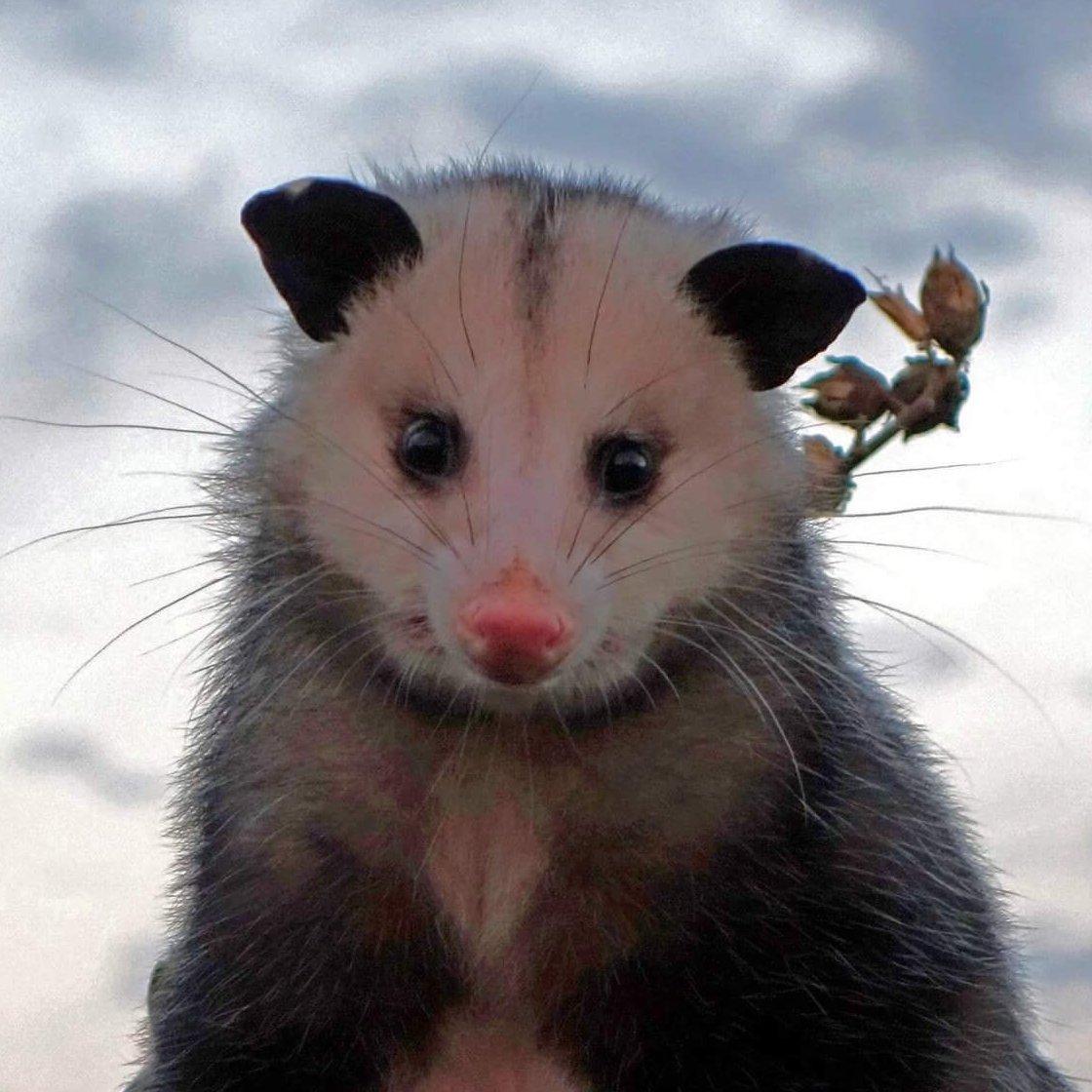 Possum Every Hour Profile Image