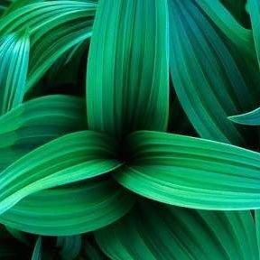 see_plants