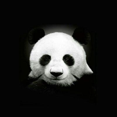 Cristiano (@Crbento1) Twitter profile photo