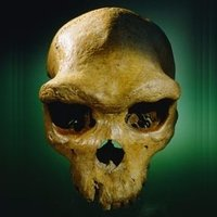 PaleoAnthropology+