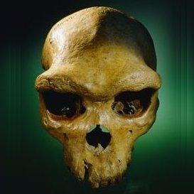 PaleoAnthropology+ (@Qafzeh) Twitter profile photo