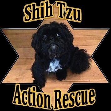 Shih Tzu Action Rescue (STAR) UK (@star_rescueuk) | Twitter