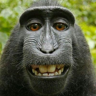 Monkey Man on Twitter: