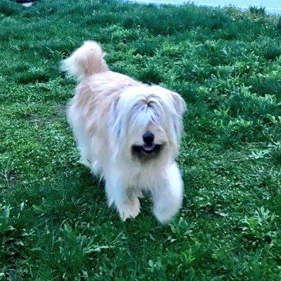Sheena E the Dog (@SheenaEDog) Twitter profile photo