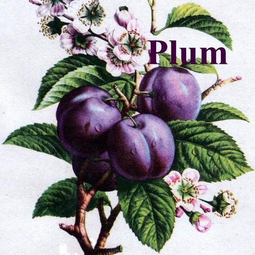 Define plum job. plum job synonyms, plum job pronunciation, plum job translation, English dictionary definition of plum job. Relates to the s British term