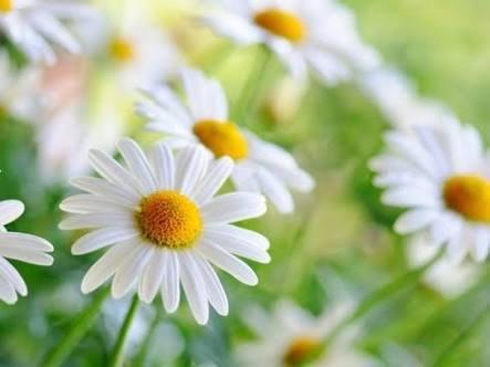 FLOWER VINES