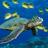 Green sea turtle normal