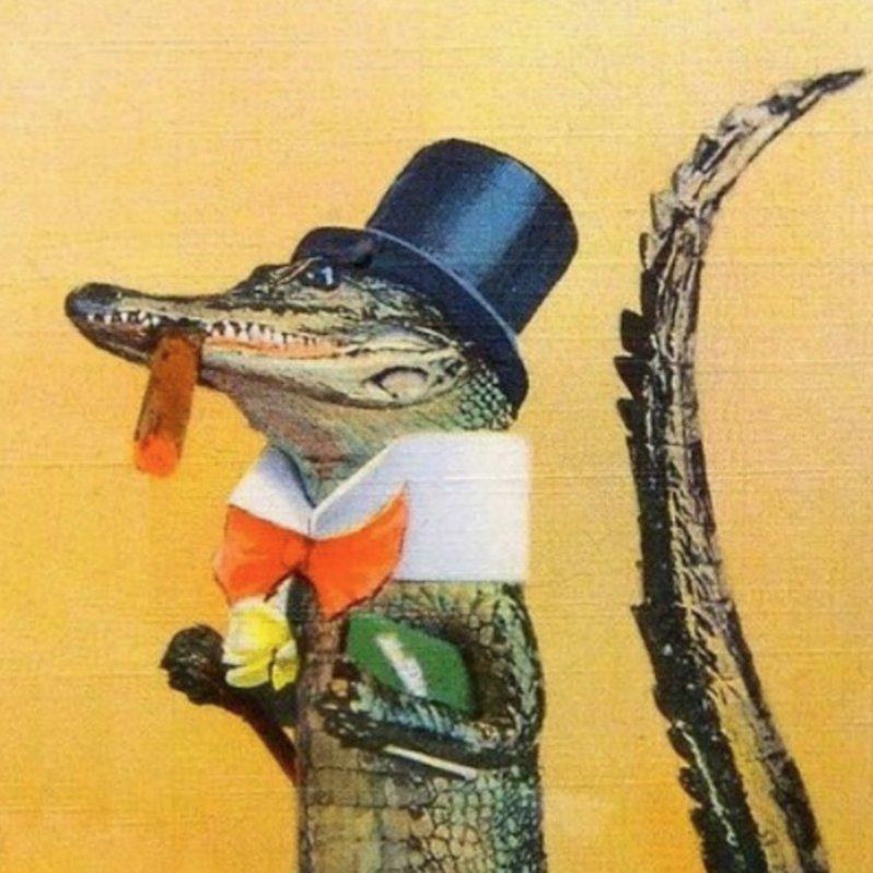 Alligator Hamilton