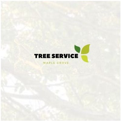 Choose The Best Tree Service Professional