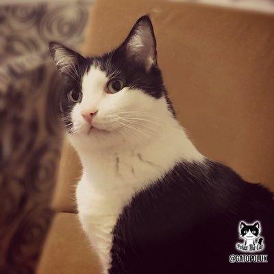 =^..^= Un lindo gatito