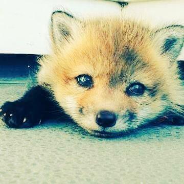 Fox(フォックス) @jpmjppgd
