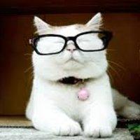 Catturd ™ ( @catturd2 ) Twitter Profile