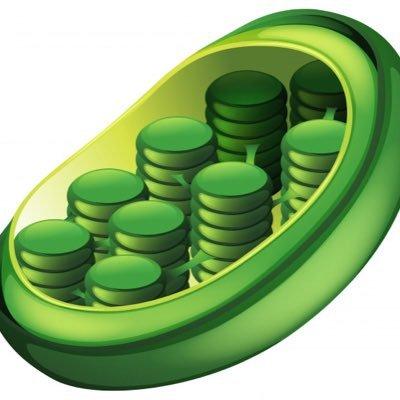 Image result for chloroplast real