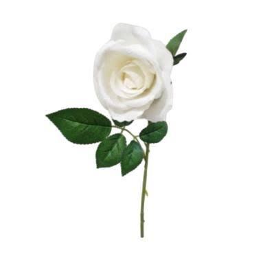 Gambar Setangkai Mawar Putih