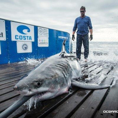 Great White Shark Cabot (@GWSharkCabot) Twitter profile photo