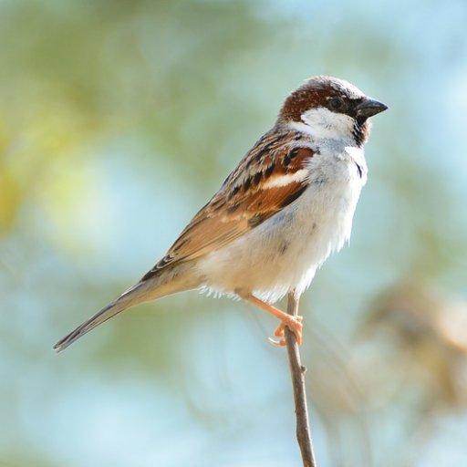SparrowOOS