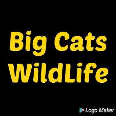 BIG CATS WILDLIFE on Twitter: