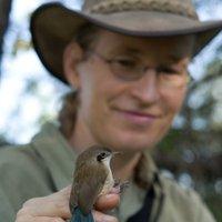 Anne Peters Bird Behavioural Evolutionary Ecology