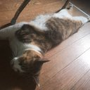 cat_u_sh