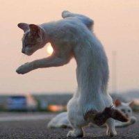 yourauntcat