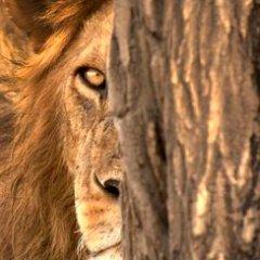 lionwoman54