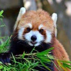 Purple Panda Pizza on Twitter: