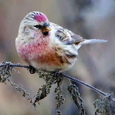 Loving nature on Twitter: