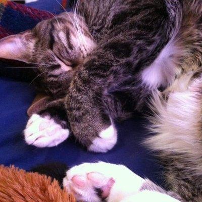 Mimicat (@Mimicat89866202) Twitter profile photo
