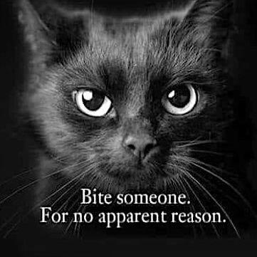 😷🆘mysteri ~ impolite arrogant *womem* ~ isle 🏝️