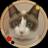 https://pbs.twimg.com/profile_images/1073885444603953152/8PV7Bjdm_normal.png