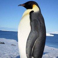 El Pingüi K