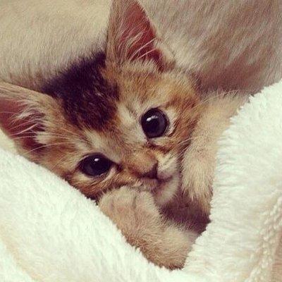 """Наталия on Twitter: """"Кошачий художник Брюнель де Невиль: на что ещё  способен автор, которого прославили смешные котики https://t.co/i7wWrpFpyV"""""""