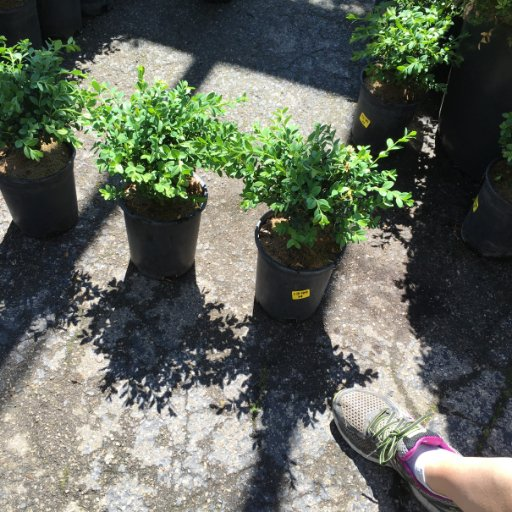 Pickyourplants