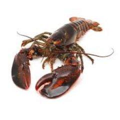 LobstahBait