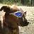 bentley_the_dog