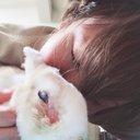 always_ANIMAL