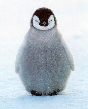ペンギンを失いしもの