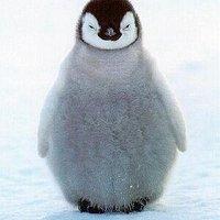 ペンギン不動産