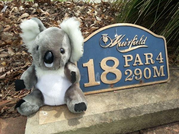 Ted, The Koala Headcover