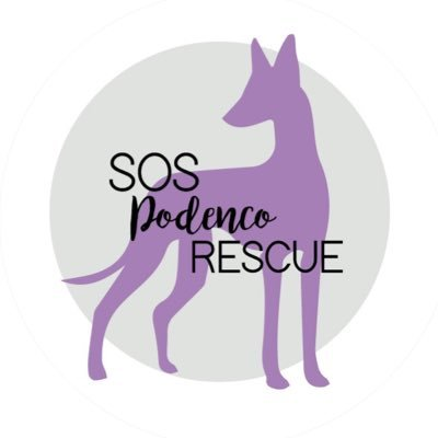 Sos Podenco Rescue On Twitter We Would Like To Thank Our Adopter Melanie Jaecques For Raising 700 Euros On Her Birthday To Help Our Rescue We Will Be Able To Save Several
