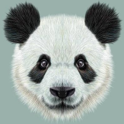 panda31808732
