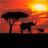 kenya_travels's avatar'