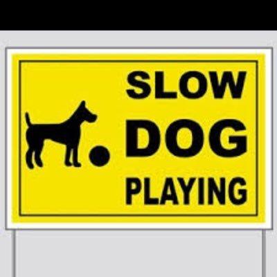 slow dog1 (@Dog1Slow )