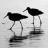 Birds_normal