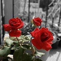 mehdi_golden
