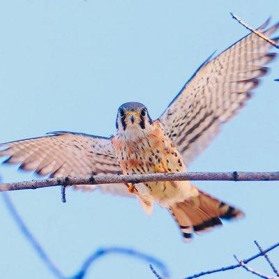 Uptown Birds (@uptownbirdsnyc )