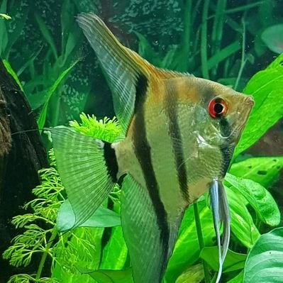 EK Aquariums on Twitter: