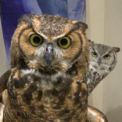 Rikki Knight Barred Owl Design Ceramic Art Tile 6 x 6